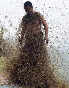 She-Ping-Bees-Swarm